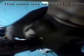 Baixa video porno mulhe transando com.cachorro no xvideo